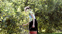Teen girl picking apples in orchard Stock Footage