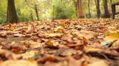 Feet sneakers walking on fall leaves Outdoor with Autumn season nature on Arkistovideo