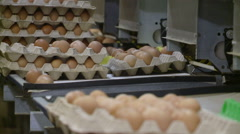 Conveyor with chicken eggs.industrial poultry. Stock Footage