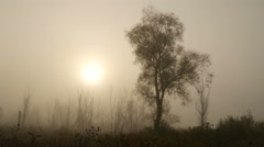 The Morning Smoke at Beautiful Sunrise Stock Footage