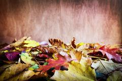 Fall leaves on wooden background. Colorful autumn Stock Photos