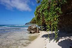 Sea shore creeping plant and rock French Polynesia Stock Photos