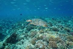 Sea turtle underwater with fish above a coral reef Kuvituskuvat