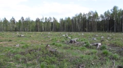 Deforestation felling trees of the forest Stock Footage