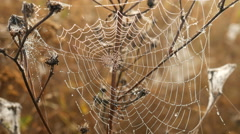 The Spider Web Closeup Background Stock Footage