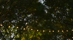 String Lights in Garden Wide Shot Stock Footage