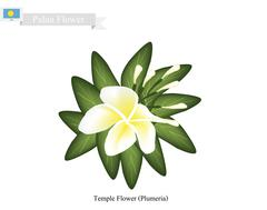 Temple Flower, A Popular Flower in Palau Stock Illustration