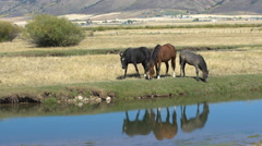 Three horses grazing next to river Stock Footage