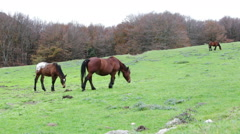 Beautiful wild horse in the forest in the mount Cucco in Umbria, in Italy. Stock Footage