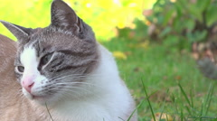 Cat in grass enjoing being pet by human hand 4k Stock Footage