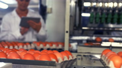 Eggs cartons moving on the production line Stock Footage