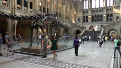 People Walking Inside the Natural History Museum in Central London Stock Footage