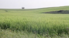Golan Heights green fields Stock Footage
