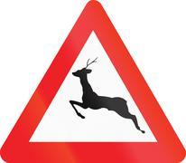 Belgian warning road sign - Wild animals Stock Illustration