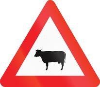 Belgian warning road sign - Livestock crossing Stock Illustration