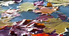 Bright Autumn Leaves Fall 4K Stock Footage