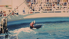 Los Angeles 1977:  man riding a killer whale at Marineland of the Pacific Stock Footage