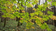 Autumn Day in Shady Forest Stock Footage