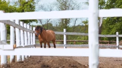 Horse in the paddock behind fence Stock Footage
