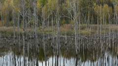 Dry Trees in the Lake Stock Footage