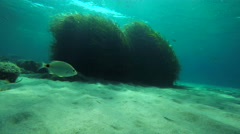 Underwater sea grass covered sand and rocky bottom Stock Footage