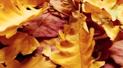 Faded red and yellow autumn leaves Stock Footage