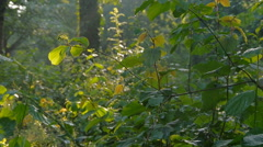 Forest in Germany, slide movement and sound Stock Footage