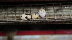 Fresh demolished quail eggs Stock Footage