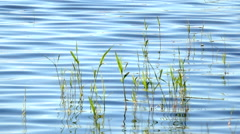 Reeds in lake. Tranquil nature background film clip. Stock Footage