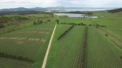 Backward flight over Devil's Corner Vineyard in Tasmania, Australia Stock Footage