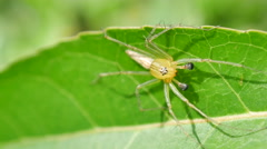 Spider on the leaf Stock Footage