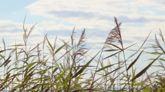 Reeds and sky. Tranquil nature background film clip. Stock Footage