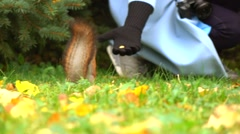 Girl feeding squirrel in autumn park slow motion video Stock Footage