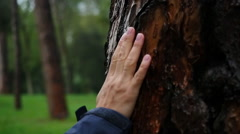 Female hand touching tree bark 1 Stock Footage