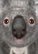 3D Rendering Koala Bear Stock Illustration