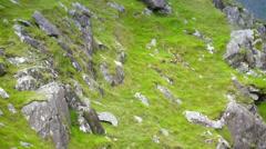 Big rocks on the mountain steep in Ireland Stock Footage