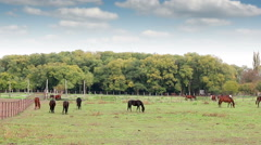 Herd of horses on pasture rural landscape Stock Footage