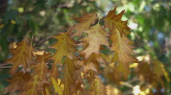 Nature changes color in september Stock Footage