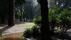 Old Park after the rain Stock Footage