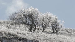 Tree in the wind on Golan Heights Stock Footage