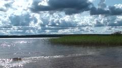 River, reeds, gray sky Stock Footage