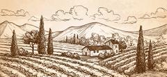 Hand drawn vineyard landscape. Stock Illustration