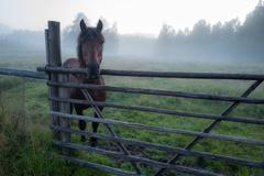 Beautiful horse is standing in foggy paddock Stock Photos