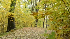 Leaves are falling in the autumn forest Stock Footage