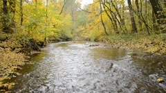A creek in the autumn forest, zoom out Stock Footage