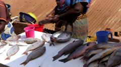 Women fish street sellers  city market -Bandim Guinea Africa Stock Footage