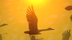 Frozen in flight. Geese , birds flying in sun beams, rays, light, shadows Stock Footage