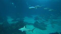 Lisbon Oceanarium schools of fish Stock Footage