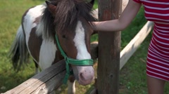 Pretty girl playing with pony in zoo Stock Footage