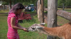 Attractive woman feeding a beautiful lama in farm Stock Footage